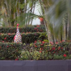 Отель Travellers Palm Court фото 3