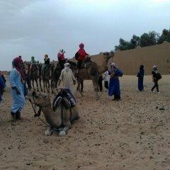 Отель Desert Camel Camp Марокко, Мерзуга - отзывы, цены и фото номеров - забронировать отель Desert Camel Camp онлайн приотельная территория