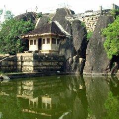 Отель Rajarata Lodge Шри-Ланка, Анурадхапура - отзывы, цены и фото номеров - забронировать отель Rajarata Lodge онлайн приотельная территория фото 2
