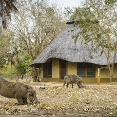 Отель Montebelo Gorongosa Lodge & Safari 3* Стандартный номер разные типы кроватей фото 4