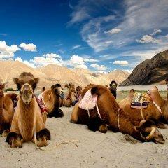 Cold Desert Camp Hunder India Zenhotels