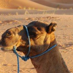 Отель Auberge De Charme Les Dunes D´Or Марокко, Мерзуга - отзывы, цены и фото номеров - забронировать отель Auberge De Charme Les Dunes D´Or онлайн с домашними животными