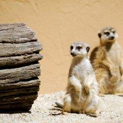 Отель Bambara Hotel Premium Венгрия, Силвашварад - отзывы, цены и фото номеров - забронировать отель Bambara Hotel Premium онлайн с домашними животными