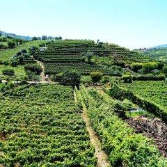 Отель Douro Valley - Casa Vale do Douro Португалия, Ламего - отзывы, цены и фото номеров - забронировать отель Douro Valley - Casa Vale do Douro онлайн фото 2