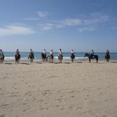 Отель Guesthouse Camelion пляж фото 2