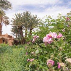 Отель Ecolodge - La Palmeraie Марокко, Уарзазат - отзывы, цены и фото номеров - забронировать отель Ecolodge - La Palmeraie онлайн