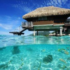 Отель Hilton Moorea Lagoon Resort and Spa 5* Бунгало с различными типами кроватей фото 5