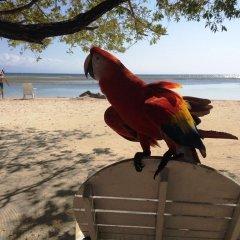 Отель Sea Eye Hotel - Sunset Building Гондурас, Остров Утила - отзывы, цены и фото номеров - забронировать отель Sea Eye Hotel - Sunset Building онлайн пляж