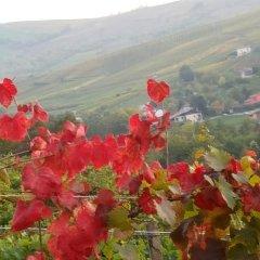 Отель B&B Monteguzzo Италия, Сан-Мартино-Сиккомарио - отзывы, цены и фото номеров - забронировать отель B&B Monteguzzo онлайн фото 6