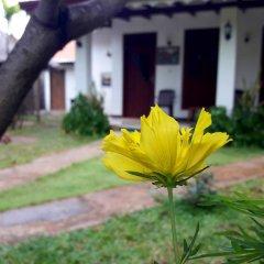 Sylvester Villa Hostel Negombo Номер категории Эконом с различными типами кроватей фото 6