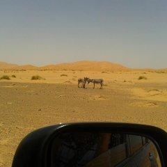 Отель Night Desert Camp Марокко, Мерзуга - отзывы, цены и фото номеров - забронировать отель Night Desert Camp онлайн фото 8