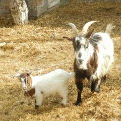 Отель HyeLandz Eco Village Resort с домашними животными