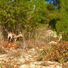 Отель Tur Sinai Organic Farm Resort Иерусалим фото 22