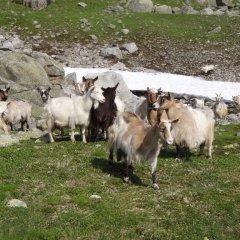 Отель Skysstasjonen Cottages с домашними животными