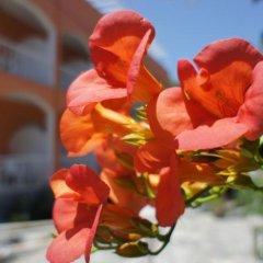 Отель Benitses Arches Греция, Корфу - отзывы, цены и фото номеров - забронировать отель Benitses Arches онлайн фото 2
