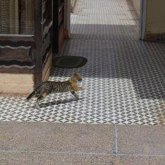 Отель Hôtel La Gazelle Ouarzazate Марокко, Уарзазат - отзывы, цены и фото номеров - забронировать отель Hôtel La Gazelle Ouarzazate онлайн интерьер отеля