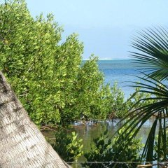 Отель Moorea Surf Bed and Breakfast пляж