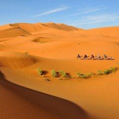 Отель Riad Ali Марокко, Мерзуга - отзывы, цены и фото номеров - забронировать отель Riad Ali онлайн приотельная территория фото 2