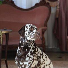 Гостиница Бристоль с домашними животными