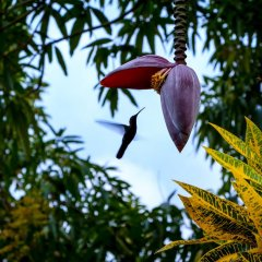 Отель Pure Garden Resort Negril фото 3