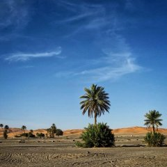Отель Morocco Desert Trek Марокко, Мерзуга - отзывы, цены и фото номеров - забронировать отель Morocco Desert Trek онлайн пляж фото 2