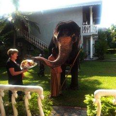 Отель Bougain Villa Шри-Ланка, Берувела - отзывы, цены и фото номеров - забронировать отель Bougain Villa онлайн