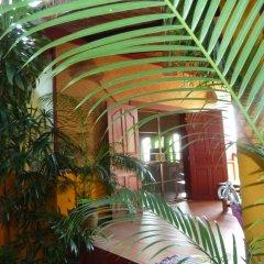 Отель The Old Tree House развлечения