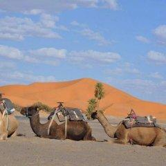 Отель Riad Kemkem Марокко, Мерзуга - отзывы, цены и фото номеров - забронировать отель Riad Kemkem онлайн приотельная территория фото 2