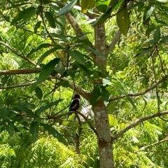 Отель Mangrove Villa Шри-Ланка, Бентота - отзывы, цены и фото номеров - забронировать отель Mangrove Villa онлайн приотельная территория фото 2