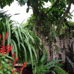 Отель Ta Phin Stone Garden Ecological Вьетнам, Шапа - отзывы, цены и фото номеров - забронировать отель Ta Phin Stone Garden Ecological онлайн фото 3