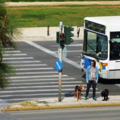 Miramare Hotel городской автобус