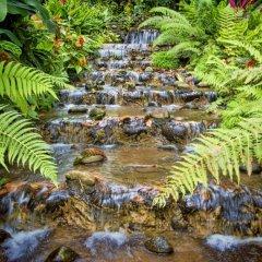 Отель Chachagua Rainforest Ecolodge фото 13