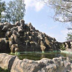Гостиница Оазис в Лесу бассейн фото 3