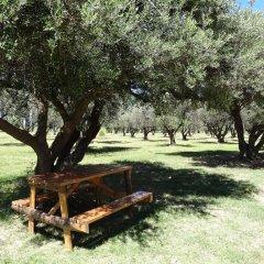 Treehouse Hostel Сан-Рафаэль