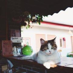 Chengdu Dreams Travel Youth Hostel с домашними животными
