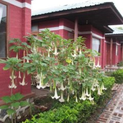 Отель Pyi1 Guest House Мьянма, Хехо - отзывы, цены и фото номеров - забронировать отель Pyi1 Guest House онлайн фото 18