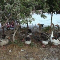 Azmakbasi Camping Турция, Атакой - отзывы, цены и фото номеров - забронировать отель Azmakbasi Camping онлайн пляж