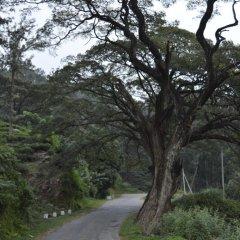 Отель Green Valley Holiday Inn Шри-Ланка, Бандаравела - отзывы, цены и фото номеров - забронировать отель Green Valley Holiday Inn онлайн приотельная территория