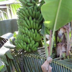 Отель Taharuu Surf Lodge Французская Полинезия, Папеэте - отзывы, цены и фото номеров - забронировать отель Taharuu Surf Lodge онлайн фото 12