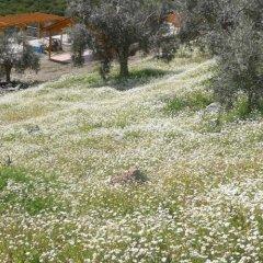 Отель Natureland Efes фото 4