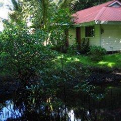 Отель Pacific Treelodge Resort Федеративные Штаты Микронезии, Косраэ - отзывы, цены и фото номеров - забронировать отель Pacific Treelodge Resort онлайн фото 3
