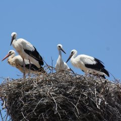 City Stork Hostel