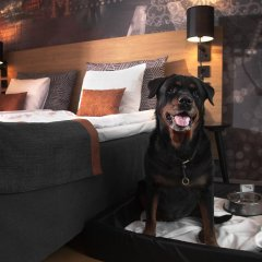 Отель Scandic Karlstad City Швеция, Карлстад - отзывы, цены и фото номеров - забронировать отель Scandic Karlstad City онлайн с домашними животными