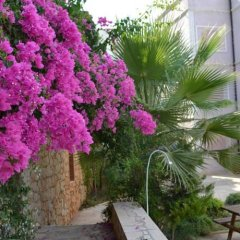 Апартаменты Deniz Apartment