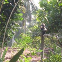 Отель Jungle Holiday Home Хиккадува приотельная территория