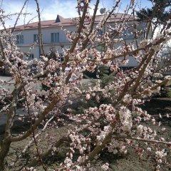 Отель Маданур Кыргызстан, Каракол - отзывы, цены и фото номеров - забронировать отель Маданур онлайн фото 4