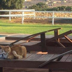 Отель Mediterranea Мальта, Марсаскала - отзывы, цены и фото номеров - забронировать отель Mediterranea онлайн с домашними животными