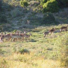 Отель Kudu Ridge Game Lodge фото 10