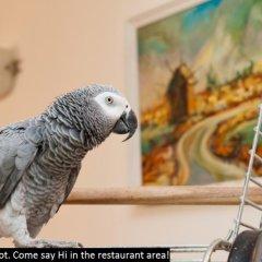 Отель Colosseum 2 Aparthotel Болгария, Солнечный берег - отзывы, цены и фото номеров - забронировать отель Colosseum 2 Aparthotel онлайн с домашними животными