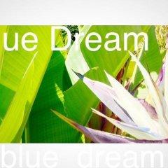 Отель Chambres d'Hotes Blue Dream Франция, Канны - отзывы, цены и фото номеров - забронировать отель Chambres d'Hotes Blue Dream онлайн спа фото 2